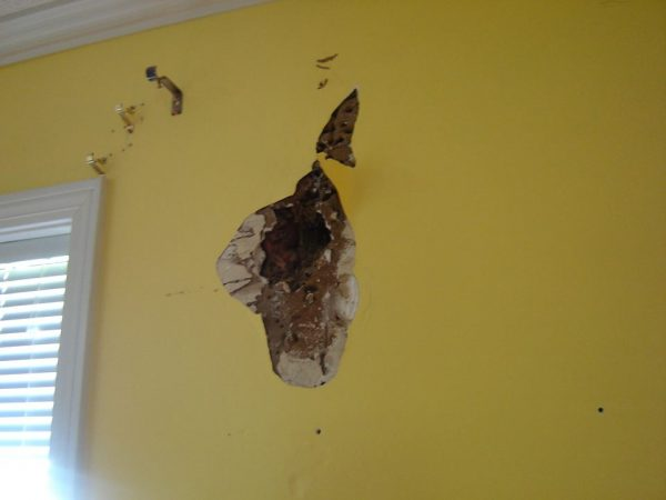 termite damage on wall